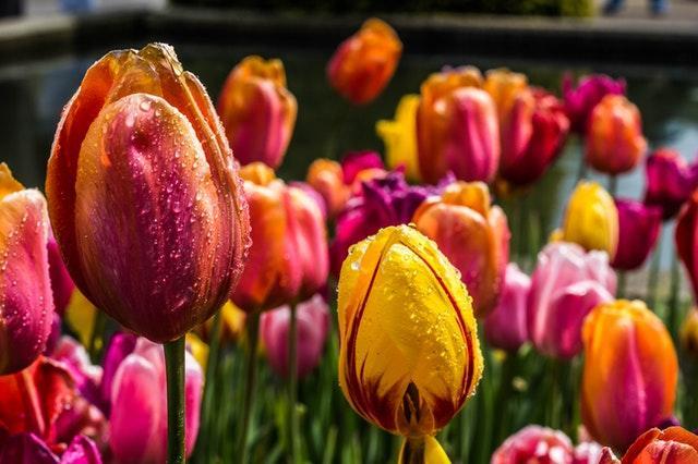 De bästa blommorna till trädgårdslandet för nybörjare