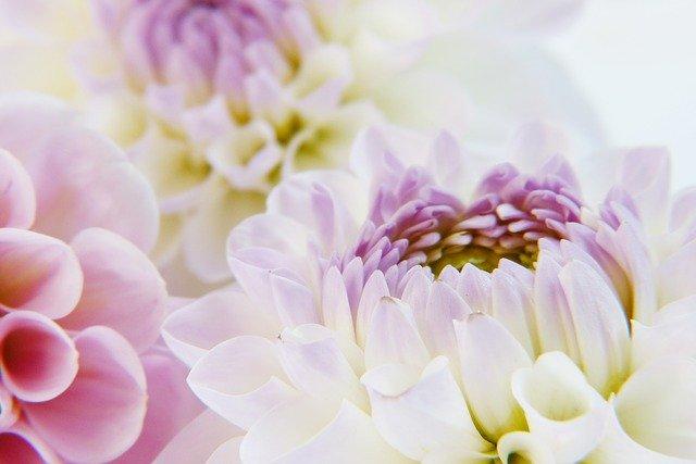 Världens vackraste blommor